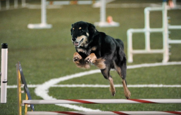 Agility and Rally for Fun Dog Training Center of Columbus