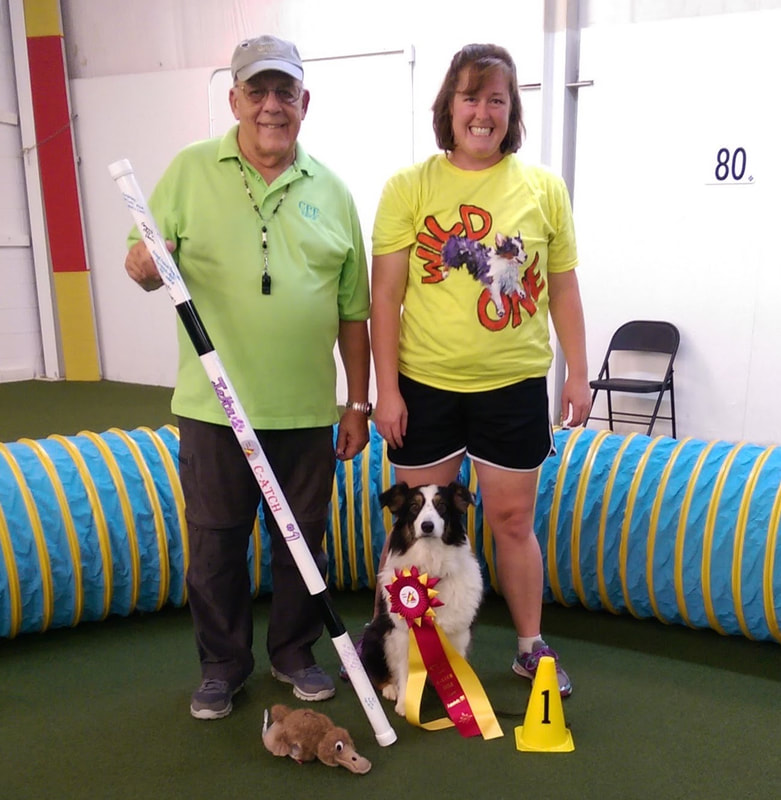 Agility and Rally for Fun Dog Training Center of Columbus Ohio - Home
